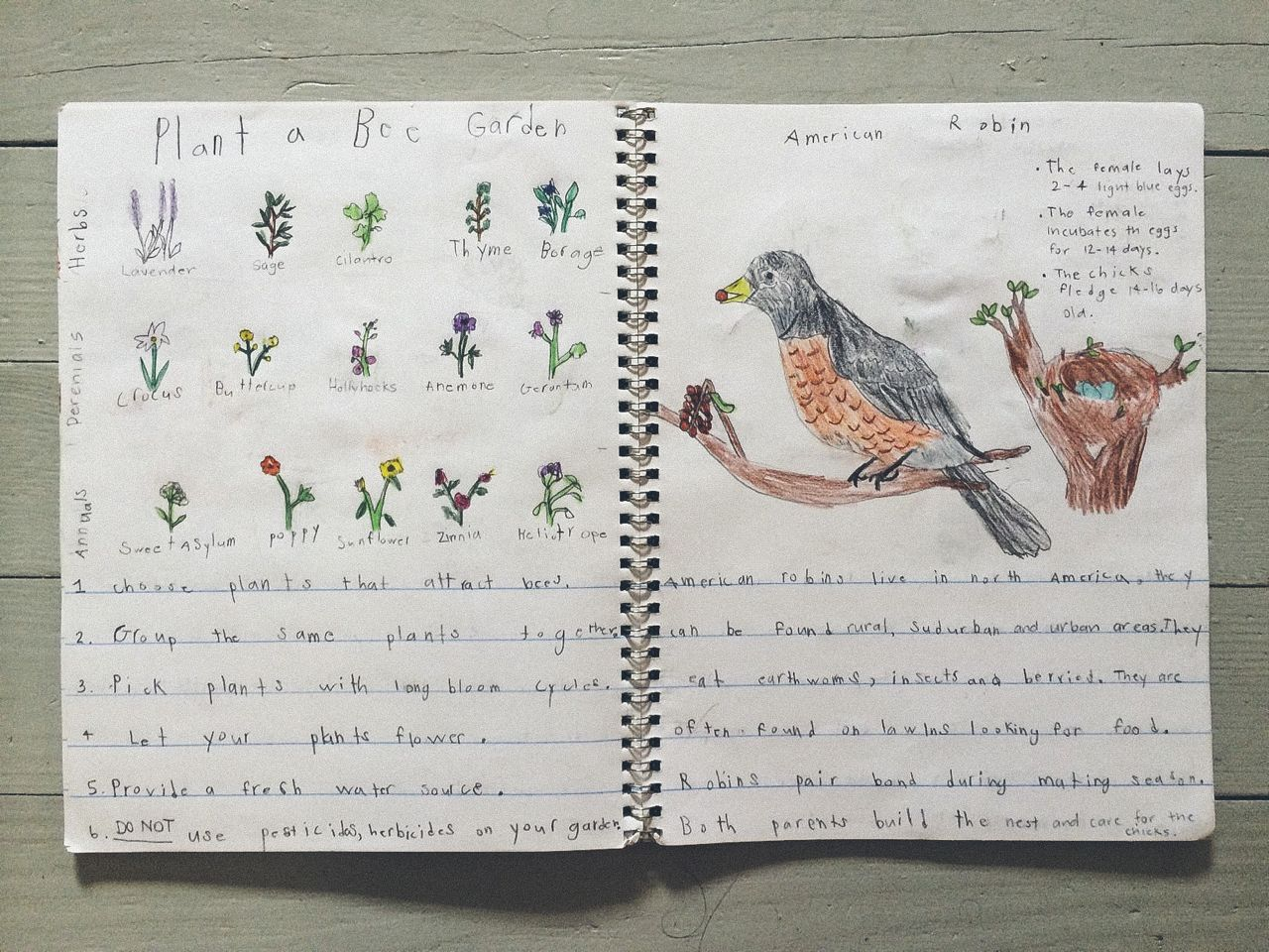 Pollinator Plants & American Robin