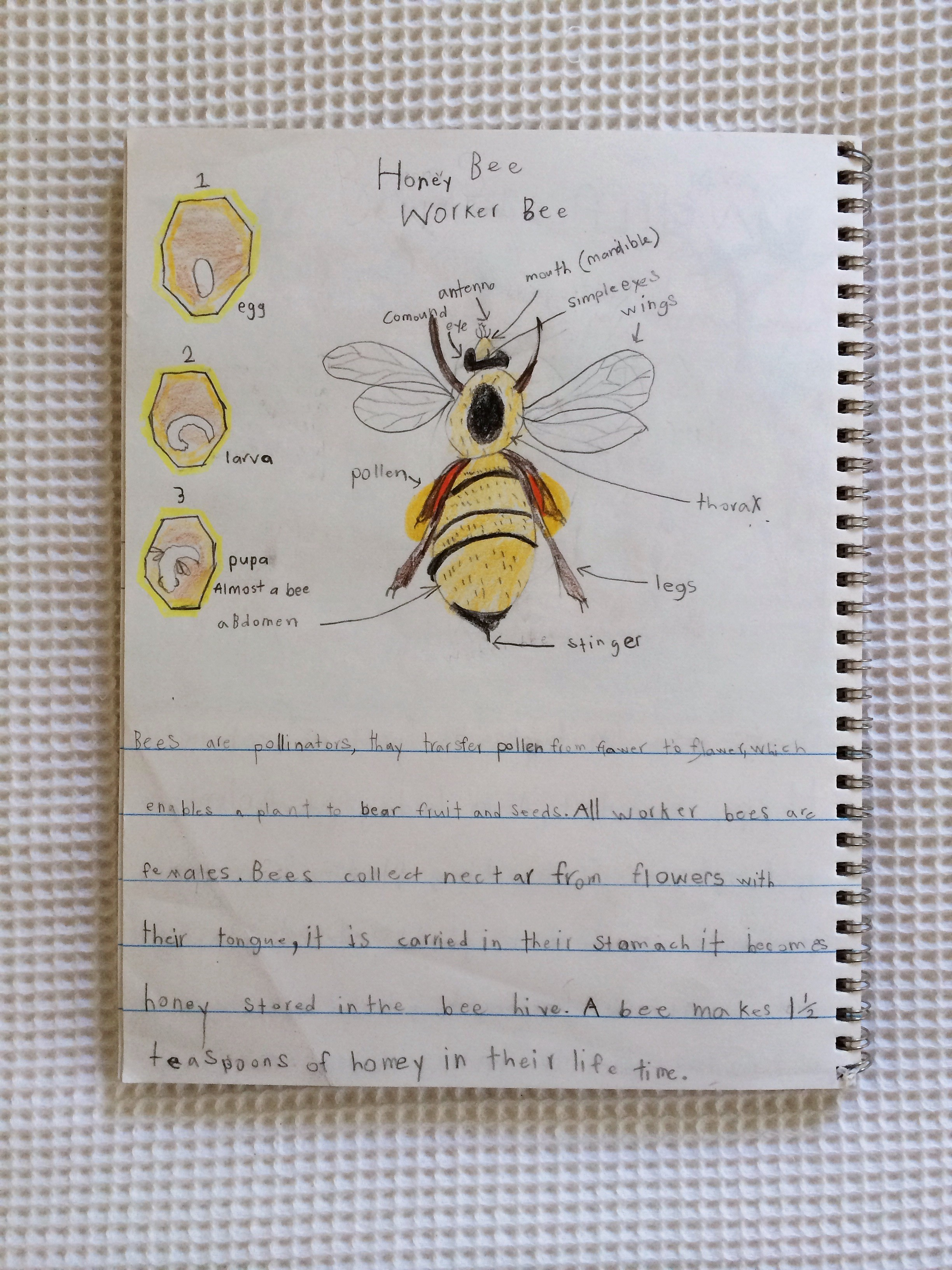 Study Bees With Children | Magnesium Blue